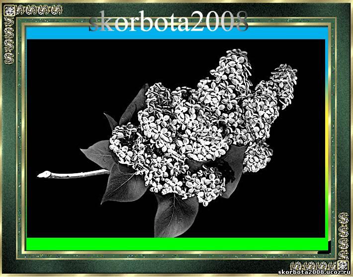 Изображение цветов на памятниках